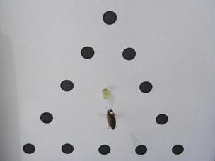 Perception visuelle : chez les abeilles l'arbre ne cache pas la forêt - CNRS (Communiqué de presse)   Abeilles, intoxications et informations   Scoop.it