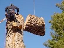 Viera tree service   Pioneer in Tech Posts   Scoop.it