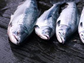 Norway's Second-Largest Export Threatened by Deadly Virus | Aquaculture Directory | Aquaculture Directory | Scoop.it