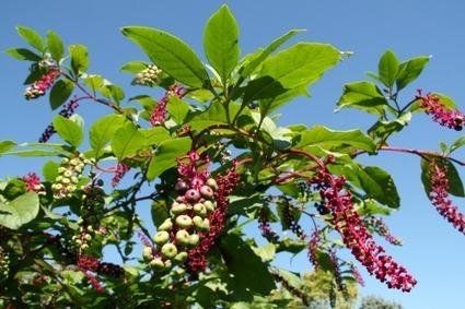 Quel est l'impact des plantes invasives sur les écosystèmes ? - Futura Sciences | Bio3D | Scoop.it
