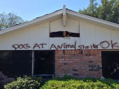 Animals reunited with owners in blast's aftermath | Pet News | Scoop.it