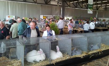 Cocorico pour l'aviculturesur le Salon de l'Agriculture! - Aqui.fr | Revue de presse : l'agriculture en Aquitaine | Scoop.it