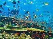 Indonesia | Coral Reefs and Climate Change | Tourism : Sustainability | Scoop.it