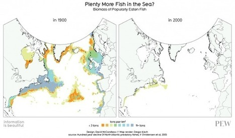 The impact of industrial fishing? See for yourself | OUR OCEANS NEED US | Scoop.it