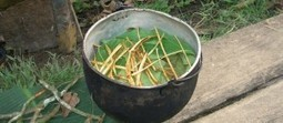 Ayahuasca and Cancer: One Man's Experience - Waking Times « Waking Times | Counterculture | Scoop.it