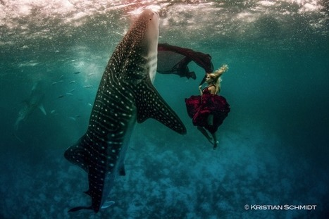 Spectacular Underwater Whale Shark Fashion Shoot - My Modern Metropolis | What Surrounds You | Scoop.it
