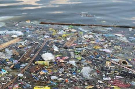 Why the 'Break Free From Plastic' movement is a really big deal | The EcoPlum Daily | Scoop.it