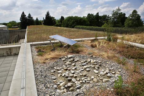 A Genève les toits se mettent au vert | Toitures végétales & Biodiversité urbaine | Scoop.it