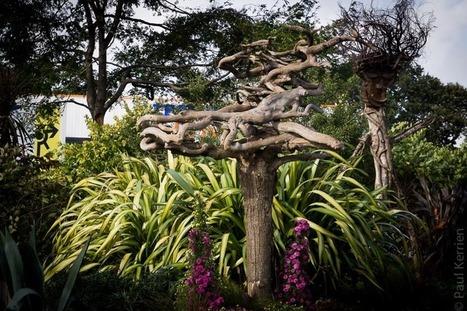 Bretagne - Finistère :  Quand des arbres font... le poirier (3 photos) | photo en Bretagne - Finistère | Scoop.it