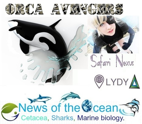 Other Captive #Orcas - Historical Chronology | A Whale Of A Business | FRONTLINE | PBS | Odin Prometheus: Earth's History | Scoop.it