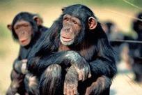 ¿Qué nos pueden enseñar unos monos sobre la innovación en la empresa? | CAMEETIC | Scoop.it