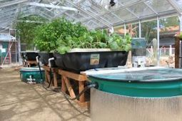 Tucson's aquaponics community in the spotlight | Aquaponics World View | Scoop.it