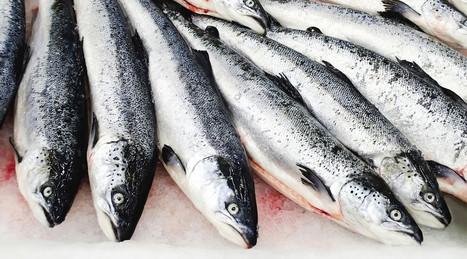 Fisk har ein klar effekt på søvn, angst og kognitive funksjonar | Liv & Røre | Scoop.it