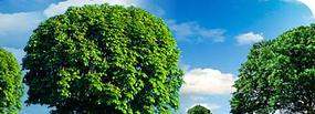 Environmental studies in Islamabad | QP Corp | Environmental studies in Islamabad | Scoop.it