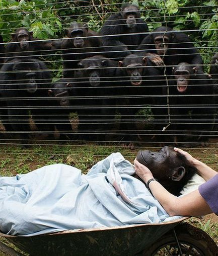 Les animaux pleurent la perte de leurs proches