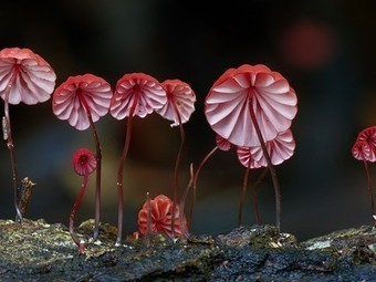 Nature Blows My Mind! Otherworldly photographs of rare fungi (Video)   Biodiversity protection   Scoop.it