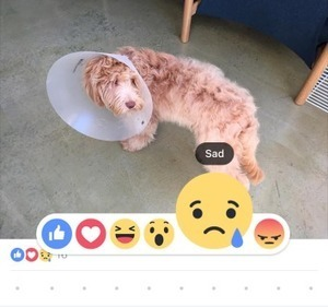 """""""Wow,"""" """"Sad,"""" """"Angry."""" Do Facebook's New Reaction Buttons Have a Hidden Agenda? 