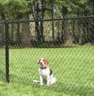 Look for Dog Fences that Work Effectively | Dog Fence | Scoop.it