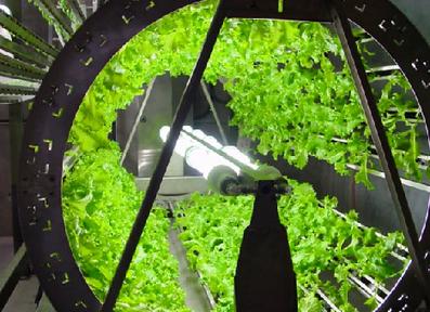 Omega Hydroponic Garden Gets Five Times As Much Food Per Watt | Unit 1 | Scoop.it