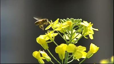 Pesticides : attention excès ! | Abeilles, intoxications et informations | Scoop.it
