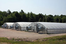 North Carolina ramps up research at greenhouse center | The Packer | North Carolina Agriculture | Scoop.it
