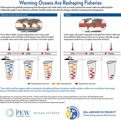 Warming Oceans Are Reshaping Fisheries | Planet Earth | Scoop.it