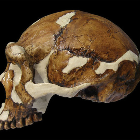 'Peking Man' Was a Fashion Plate | Archaeology News | Scoop.it