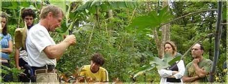 Curso de Bosque Comestible & Agroforesteria con Ernst Goetsch | Permacultura, Agricultura Organica, Huertos Urbanos, Horticultura, bosques de alimentos y otros BIO | Scoop.it