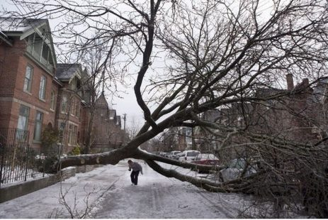 Toronto must protect trees as climate change makes for wilder weather, parks committee urges | Toronto Star | Sustain Our Earth | Scoop.it