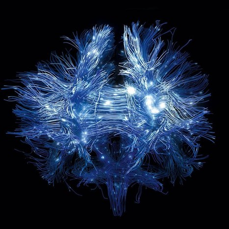 How mapping neurons could reveal how experiences affect mental wiring (Wired UK) | Brain and learning | Scoop.it