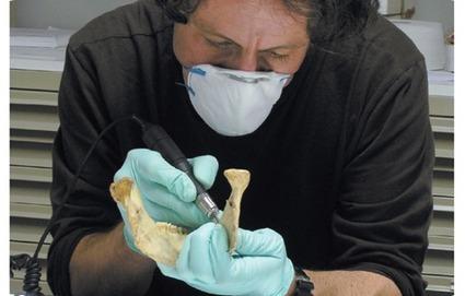 5400 años convivieron Neandertales y Sapiens en Europa   SinapSit   Docencia: TIC, innovación educativa y Ciencias naturales   Scoop.it