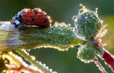 25 Most Beautiful Animals Photography on StumbleUpon | Random Ephemera | Scoop.it