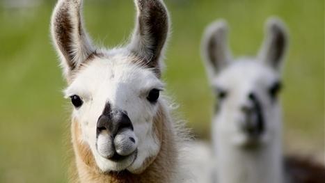 Los animales 'predicen' los temblores por la electricidad en el ambiente | Agua | Scoop.it