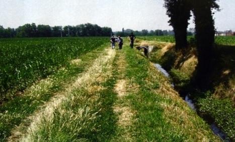 Violentate nel silenzio dei campi a Ragusa - Il nuovo orrore delle schiave romene   MigrArti   Scoop.it