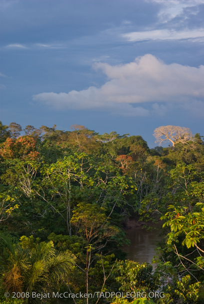 Science warns against drilling the most biodiverse rainforest on Earth | Silviculture and Forest News | Scoop.it
