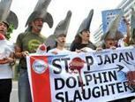 #Japan #Dolphinkilling town to open #MarinePark   #tweet4taiji | Rescue our Ocean's & it's species from Man's Pollution! | Scoop.it
