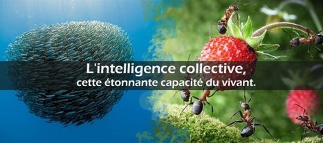 L'intelligence collective, cette étonnante capacité du vivant | EntomoScience | Scoop.it