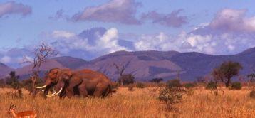 Voyage et tourisme responsable Afrique: tourisme équitable, durable, solidaire. | Ecotourisme au Maroc | Scoop.it
