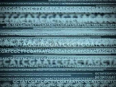 Bacterial Identification Virtual Lab | HHMI's BioInteractive | El pulso de la eSalud | Scoop.it
