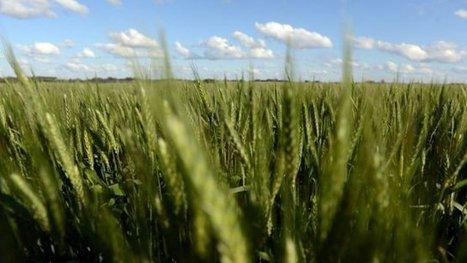 Clermont-Ferrand: plus de 200 chercheurs réunis pour développer le blé de demain - France 3   AGRONOMIE VEGETAL   Scoop.it