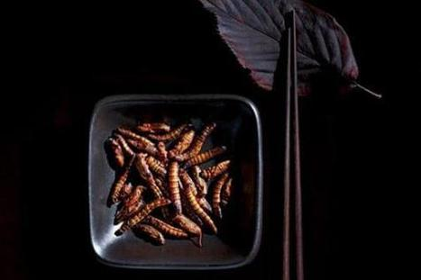 Where to eat insects in San Francisco. | 7x7 | Eco-Food Innovation | Scoop.it