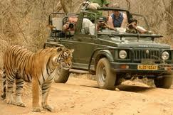Golden Triangle Tiger Tour Package   Golden Triangle Tiger Tour Package   Scoop.it