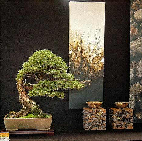 Feel-Spirit-l'Esprit de Phil.[Bonsaï]: European bonsaï San Show ... | Bonsai Express | Scoop.it