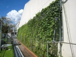 'Green curtain' DIY: Japan's Kyocera shows us how to cool buildings ... | Vertical Farm - Food Factory | Scoop.it