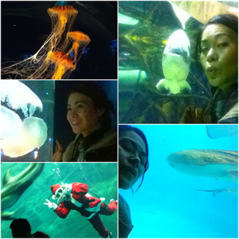 Why is Osaka Aquarium one of the coolest fishtanks in the world ..Global Aqua Link | Pets | Scoop.it