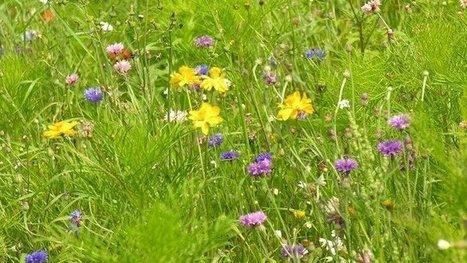 """Une pétition pour le maintien """"de la biodiversité"""" et des """"prairies urbaines"""" à Toulouse - France 3 Midi-Pyrénées   Réseau Tela Botanica   Scoop.it"""