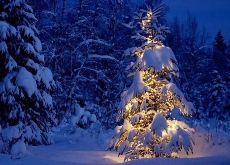 The Last Christmas Tree (Poem) | Operation Santa Claus - Santa's Blog | Christmas and Winter Holidays | Scoop.it