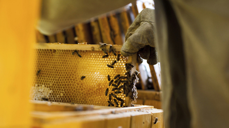 EPA sued over bees | Food issues | Scoop.it