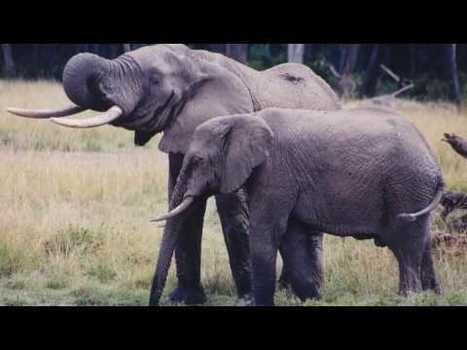 These elephant HD photos collections are a cut above the rest. If ... | Love | Scoop.it