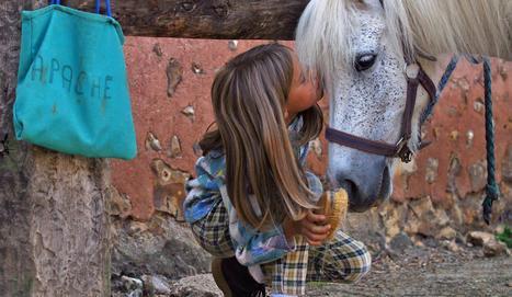 L'équitation, pas plus chère que le tennis - lavenir.net   Cheval Orne   Scoop.it